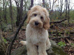 Axle puppy