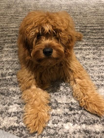 Cute pup3