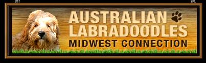 Australian Labradoodles Midwest Connection