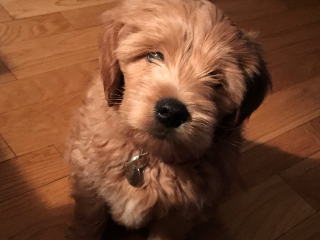 Pup head tilt