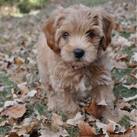 Pup in fall