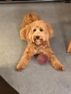 dog w ball