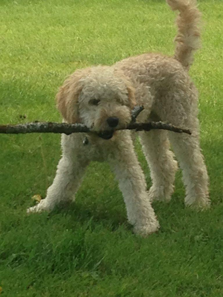 dog w stick
