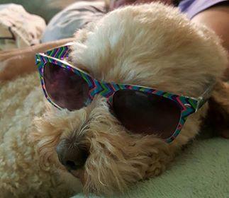 doodle w sunglasses